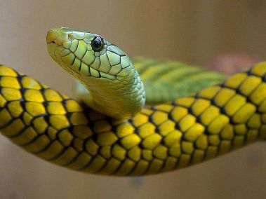 1024px-Snakes_green_reptile